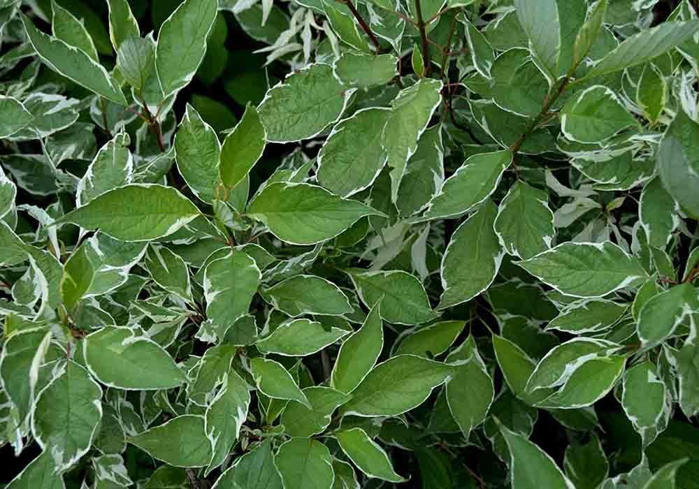 bush2